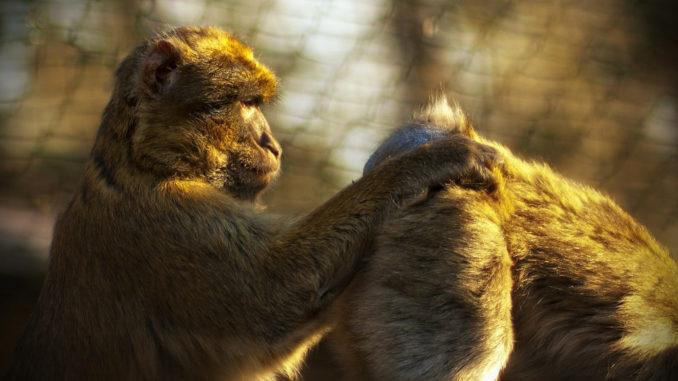 affe zoo affen tier säugetier affenbaby