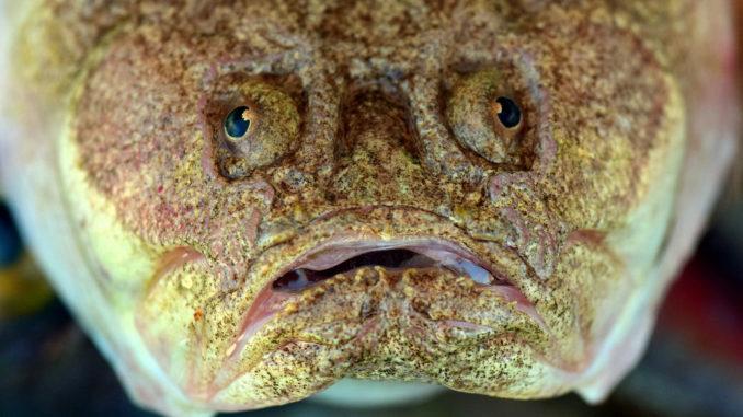 fisch fischkopf essen speise nahrung