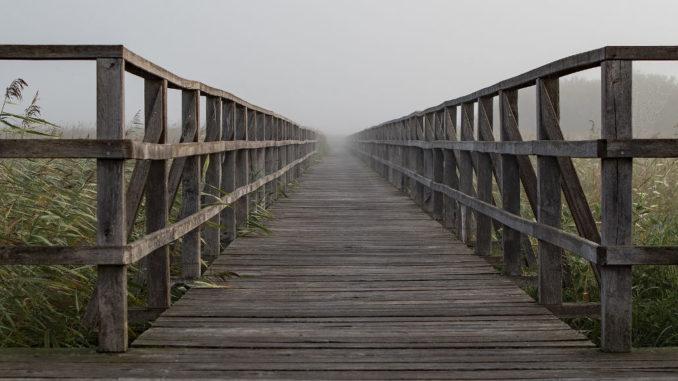 steg holzsteg ried moorlandschaft ziel perspektive