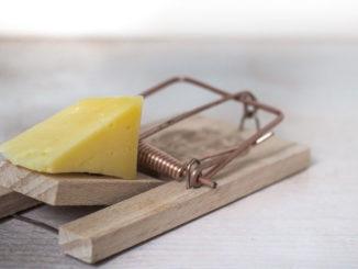 mouse trap käse gerät falle maus gefahr köder